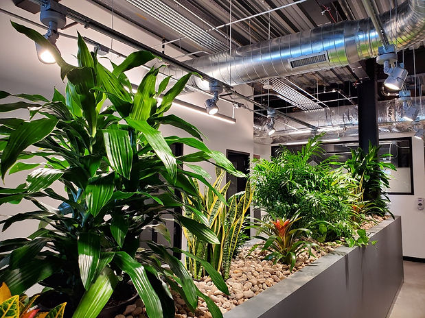 Tropical Plants in raised planter in office space