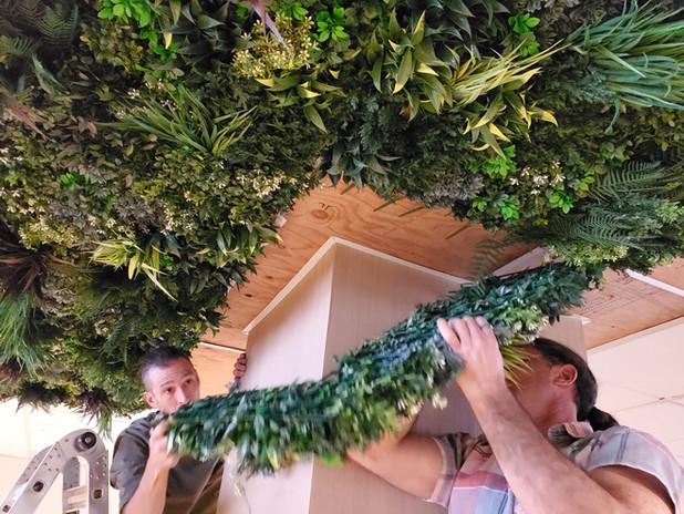 Silk plants on ceiling