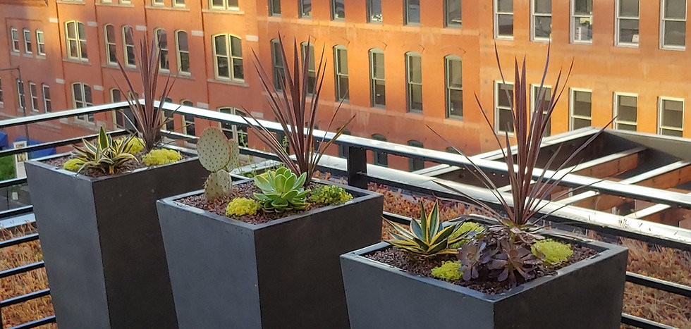 Succulents planted in pots on rooftop deck