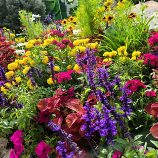 Annuals in DTC with Plant Escape Van