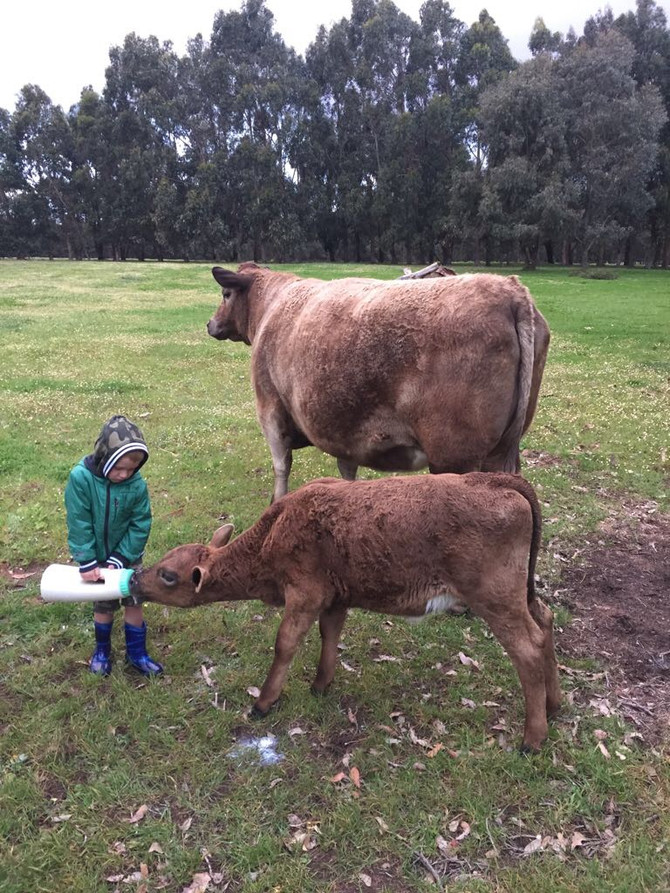 Kids enjoy feeding the animals at Turner Brook Farmstay!