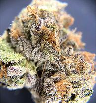 top-secret-dc-weed-review-melonatta-macro-view.jpg