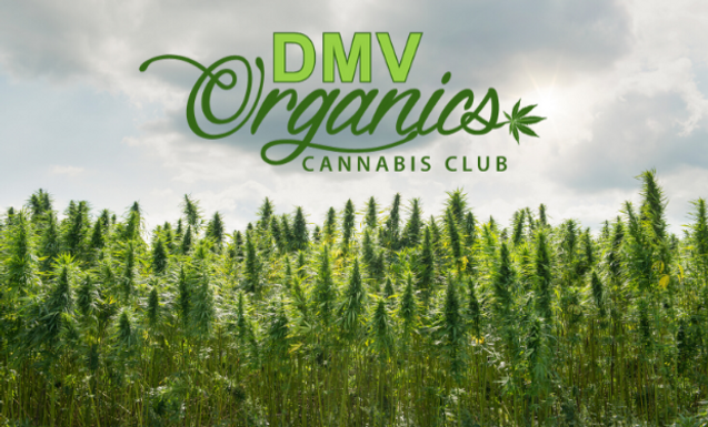 DMV Organics DC weed delivery service logo image field of weed background