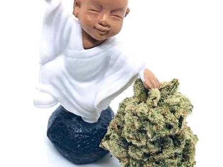 🦍 Glue - Buddha Buddy