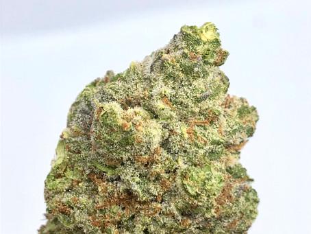 Introducing, Neon Treez DC