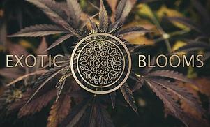 Exotic Blooms Logo