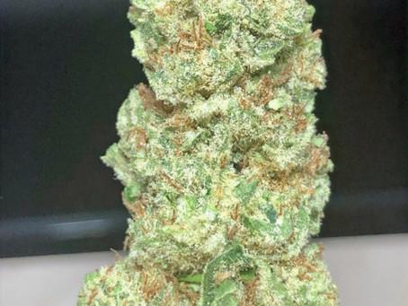 Papaya - Top Secret DC