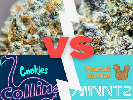 Designer Strain Deathmatch - Peanut Butter Minntz vs Collins Ave Cookies