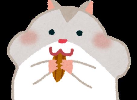 かわいい菊次郎