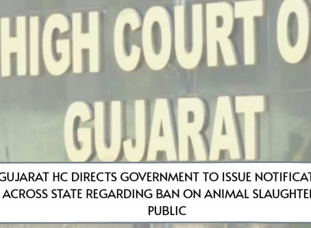 Gujarat HC Directs Government to Issue Notification Across State Regarding Ban on Animal Slaughter