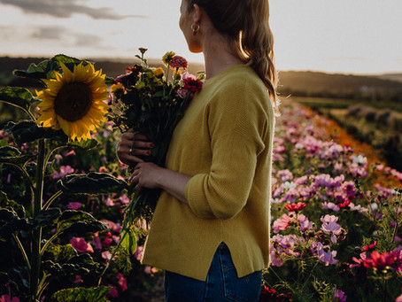 Sunset in the flowerfield