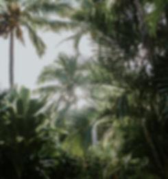Reisebilder Palmen