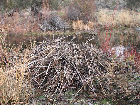 Beaver Lodge by Adam Haarberg