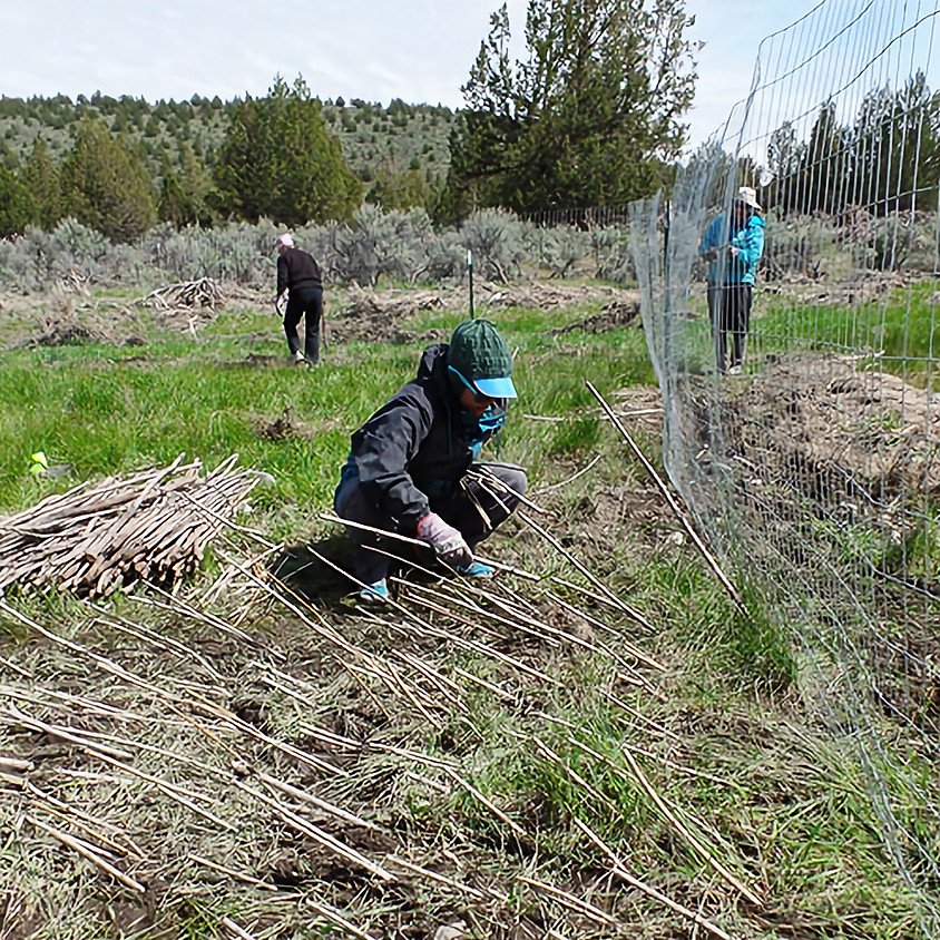 Willow Creek Planting **Rescheduled**