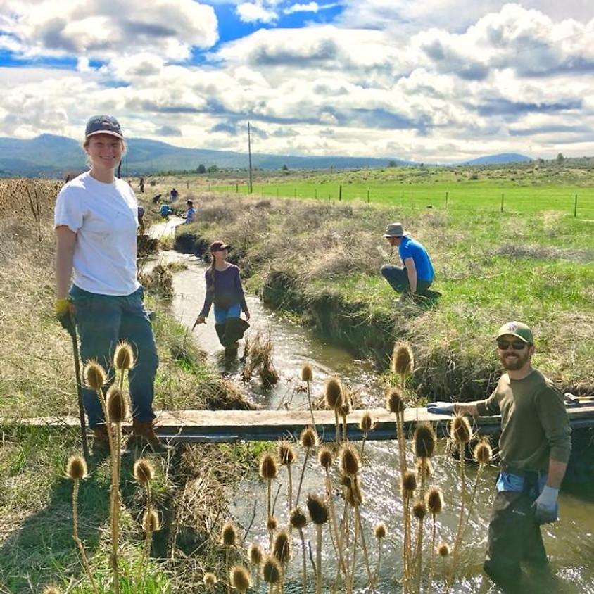 Willow Creek Planting & Restoration Project