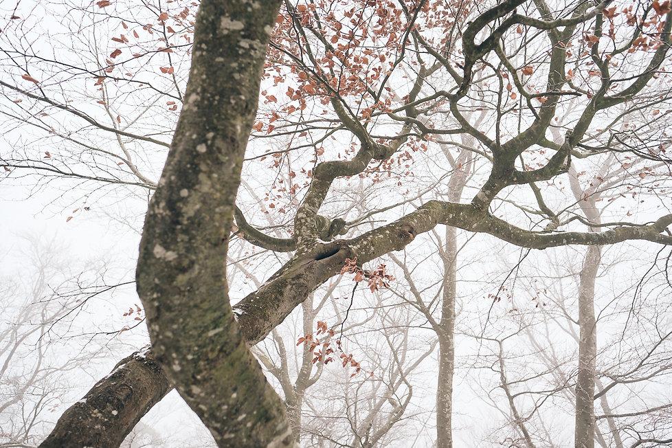 coloures_of_winter_ 2.jpg