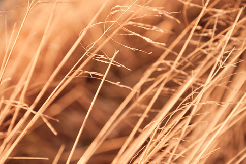 coloures_of_autumn_ 8.jpg
