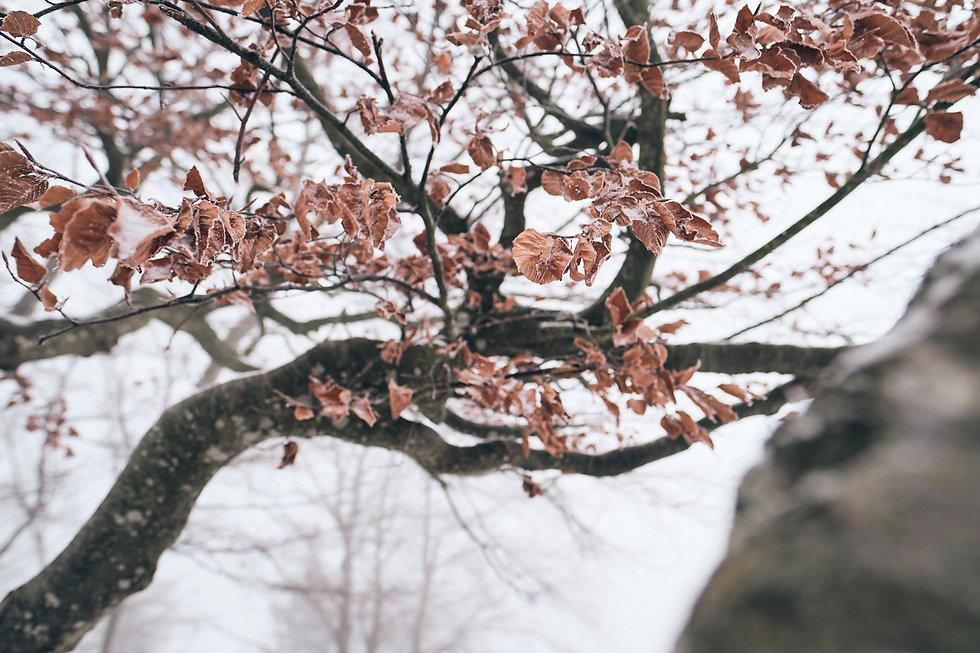 Titelbild coloures of winter by natalie krautkraemer