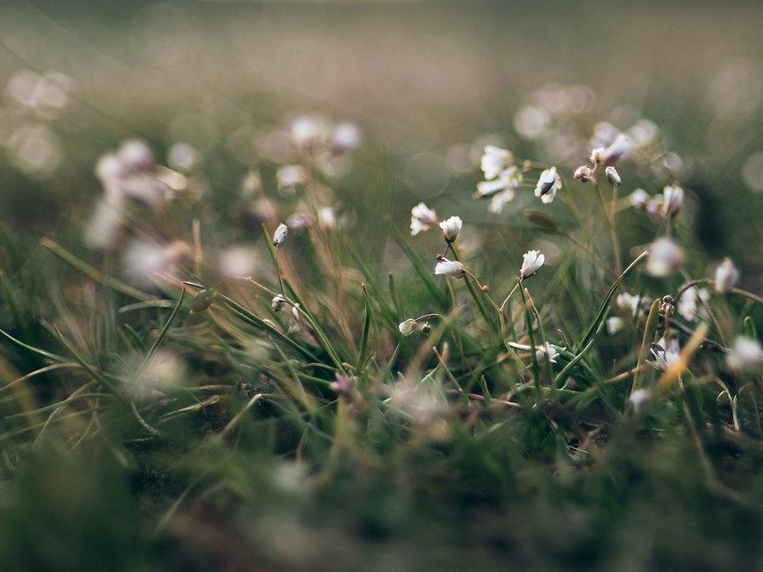 Titelbild coloures of spring by natalie krautkraemer