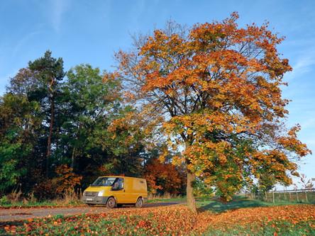 FeBo im Thüringer Wald