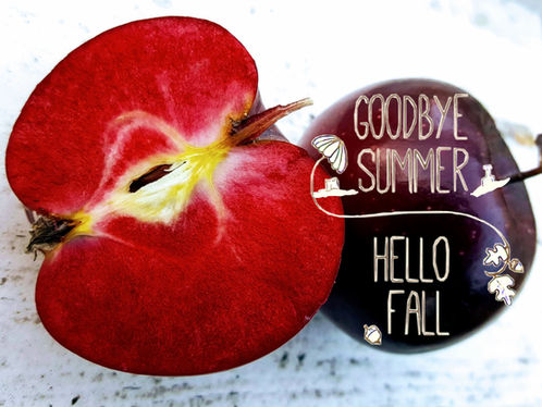 Herbstliche Grüße und Aktuelles 🍂🍃🍁