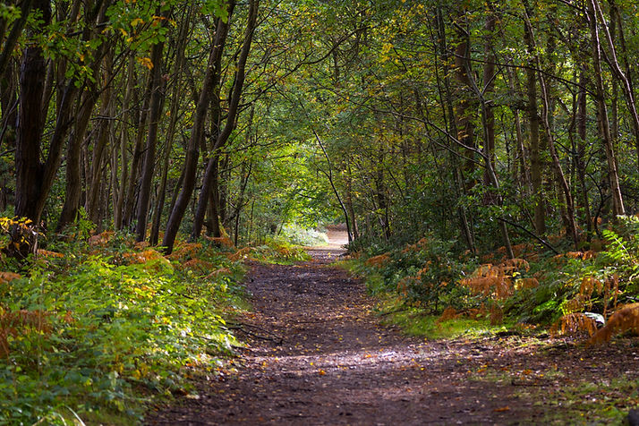Wokingham Woods.jpg