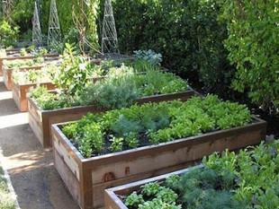 Urban-raised-bed-herb-and-salad-garden.j