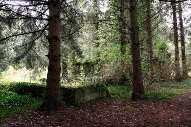 Allenwood Camp