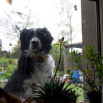 Ann's dog, Donamon