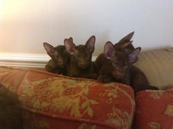 Eastpoint Kittens