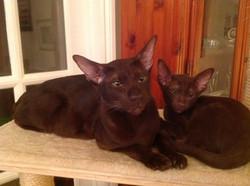 Eastpoint Kitten & Mum
