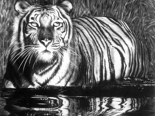 Reflective Tiger