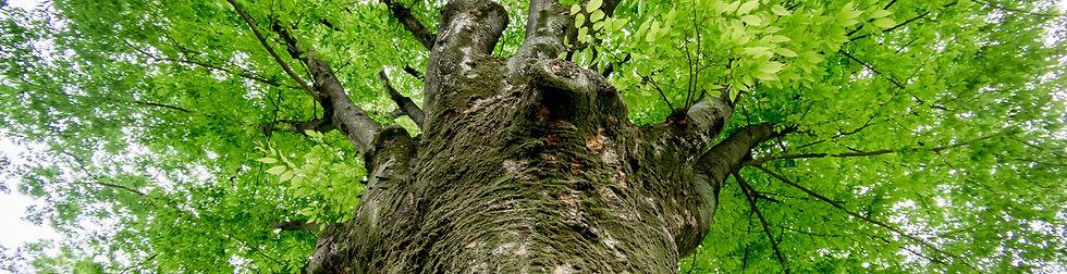 医療介護をささえる大樹
