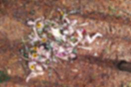 foto_misst bloemen kopie.jpg