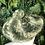 Thumbnail: Green Pom Pom hat