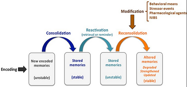 Therapeutic Memory Reconsolidation.png