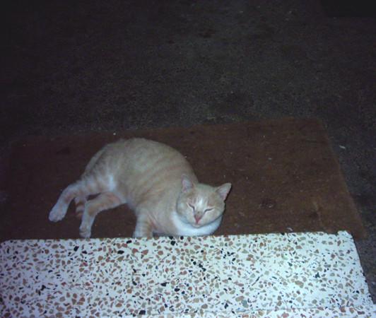 redcat.jpg