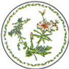 Paper Plates-CLA90735