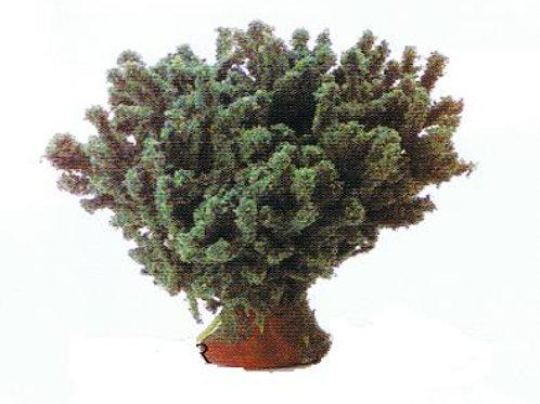 Bush-Green-LD201LGR