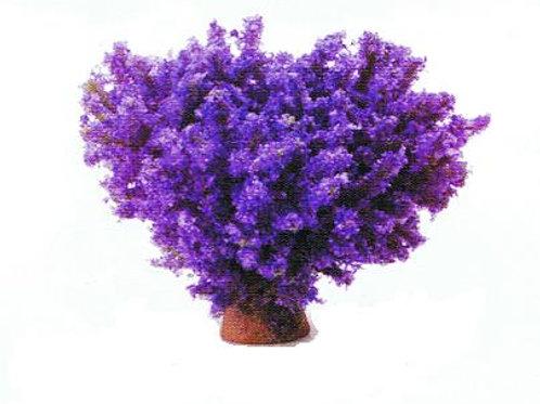 Bush-Purple