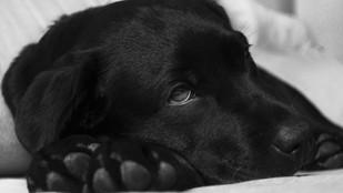 Perro con diarrea en verano, problema gástrico frecuente
