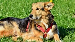 Mi perro se revuelca sobre heces o animales muertos. ¿Se puede corregir esta conducta?