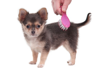 Aseo de tu cachorro