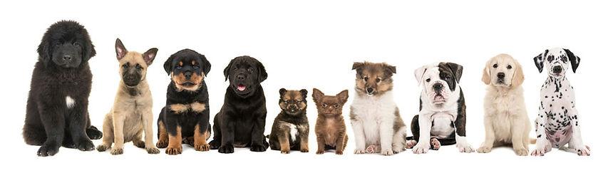 venta de cachorros 01.jpg