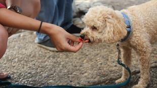Comida casera para perros, una opción muy saludable