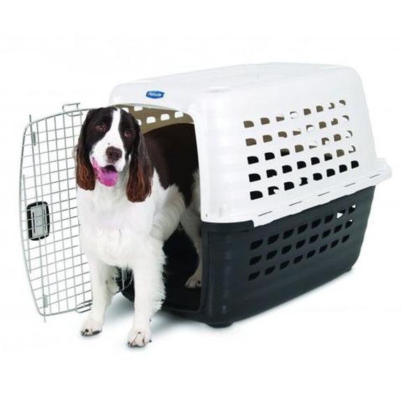 cachorros con trasnportadora.jpg