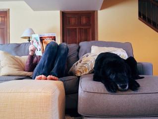 Cómo mantener tu casa limpia si convives con un perro