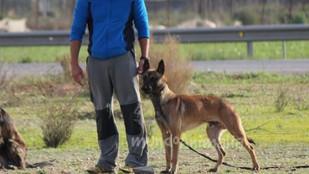 La indefensión aprendida en perros