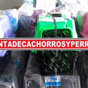 es seguro comprar en ventadecachorrosyperros (4).jpeg