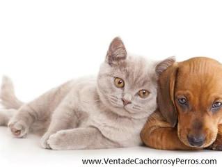 Esterilizacion y Castracion en Perros y Cachorros